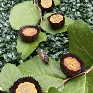 cicada chocolates